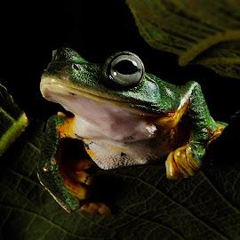 by Indah Miniarti - Animals Amphibians