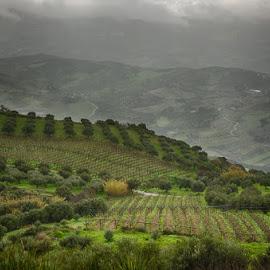Along thr road by Krasimir Lazarov - Landscapes Mountains & Hills ( vineyard, greece, tourism, island of crete, landscape, island )