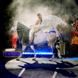Pegasus by Stephen Beatty - News & Events Entertainment