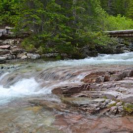 Beautiful Stream, Glacier National Park by Greg Koehlmoos - Landscapes Forests ( exploring glacier on foot, exploring glacier national park on foot, hiking glacier national park, east glacier, east glacier national park )