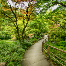 magical walkway in the Japanese Gardens at Butchard by Kathy Dee - Nature Up Close Gardens & Produce ( stairs, pathway, green, bath, gardens, trees, walkway, japanese )
