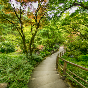 magical walkway in the Japanese Gardens at Butchard by Kathy Dee - Nature Up Close Gardens & Produce ( stairs, pathway, green, bath, gardens, trees, walkway, japanese,  )