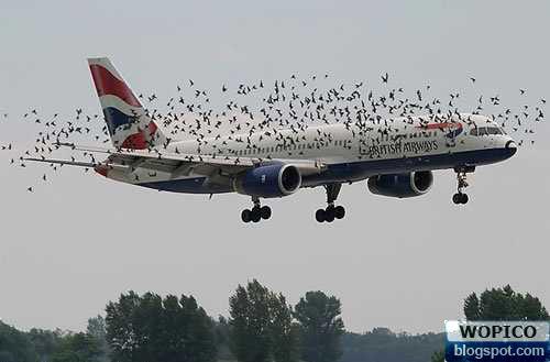 Birds Killer