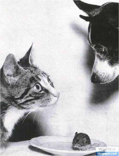 Cat Dog And Mouse