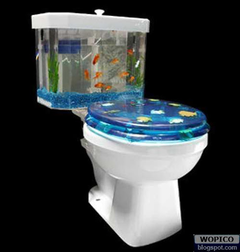 Toilet With Aquarium