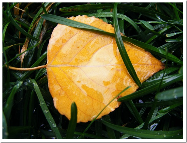 Leaf and Grass