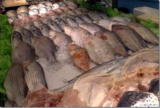 fishies 270520081312