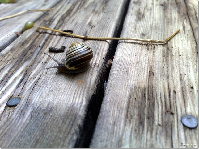 snail 70 1800x 08082008036