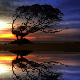 Reflection of Troubled Times by Greg Mimbs - Nature Up Close Trees & Bushes ( wind bent, reflection of troubled times, reflection, ocean, sunrise, greg mimbs, wate, weathered, silhouette,  )