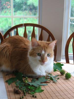 壁纸 动物 狗 狗狗 猫 猫咪 小猫 桌面 300_400 竖版 竖屏 手机