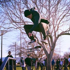 Flying High  by Gail Jones-Taylor - Sports & Fitness Skateboarding ( skateboarding, skater, action )