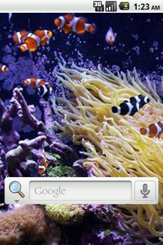 玩免費個人化APP|下載水族館ライブ壁紙 app不用錢|硬是要APP