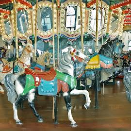 Santa Monica Pier Carousel by Stephen Beatty - City,  Street & Park  Amusement Parks (  )