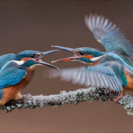 by Marlene Finlayson - Animals Birds