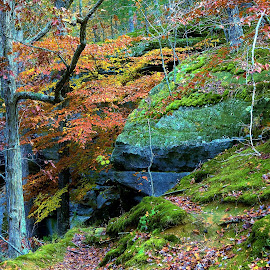 Fall Hike by Tim Hall - Landscapes Forests ( autumn leaves, fall colors, trail, moss, national parks, boulder, rock formation, hiking )