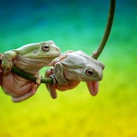 your not alone...my friend by Yusri Harisandi - Animals Amphibians