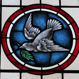 Dove of Peace by David Gilchrist - Artistic Objects Glass ( church, window, artistic, glass, stained glass )