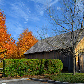 Company Matters by Pamela Chandra - Buildings & Architecture Other Exteriors ( barn, colors, fall, evening, golden )