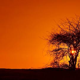 Sunset by Costin Mugurel - Nature Up Close Trees & Bushes ( mountains, nature, tree, sunset, landscape )