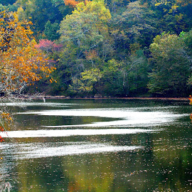 Saluda Color by Charles Toshach Jr - Landscapes Waterscapes ( saluda, fall, tree color.wind on water, river )