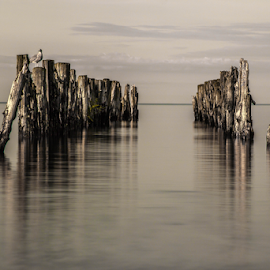 Nirvana by Julija Moroza Broberg - Landscapes Waterscapes ( reflection, old, surface, smooth, wood, waterscape, beach, seaside, jetty, coast, ancient, vikings, nature, serenity, composition, pier, perspective, evening, piece, water surface, water, old harbor, seashore, twilight, sea, latvia, quiet, seascape, soft, bird, dawn, seagull, wooden, season, thinking, nirvana, old tree, view )