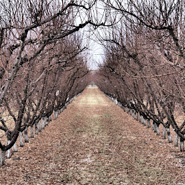 Late Fall Orchard by John Willey - Nature Up Close Trees & Bushes ( fall, peach, orchard )