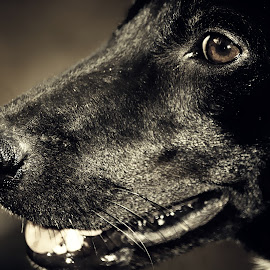 my dog by Bali Polos - Animals - Dogs Portraits