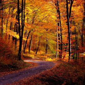 Az ősz színei by Gruber Bálint Photography - Landscapes Forests ( levelek, ősz )