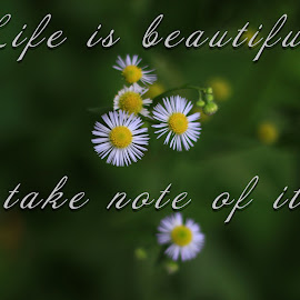 Life is Beautiful! by Dipali S - Typography Quotes & Sentences ( life is beautiful, simple, illustration, white, daisy, typography, photo, captioned )