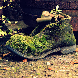 Moss Boot by Janine Kain - Nature Up Close Leaves & Grasses ( boot, nature, green, moss, garden )