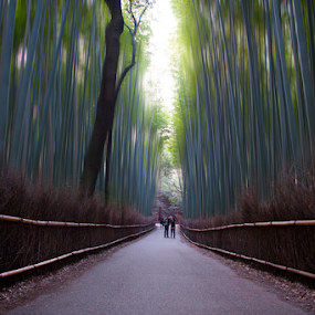 Fine Art Landscape by Lina Sariff - Digital Art Places ( japan, kyoto, fine art, bamboo forest, visit kyoto, landscape )