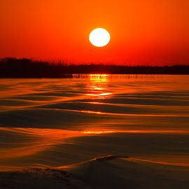 Ibera's sunset by Edith Polverini - Landscapes Sunsets & Sunrises ( argentina, corrientes, wetlands, sunset, ibera lagoon, red sun )