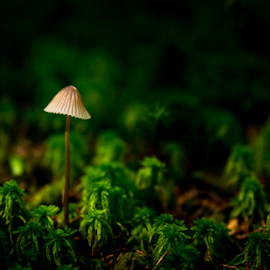 Forest beauty by Paulius Bruzdeilynas - Nature Up Close Mushrooms & Fungi ( mushroom, fungi, color, autumn, green, summer, forest, lonely )