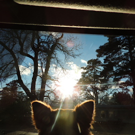 Hello World ! How are you? by Elizabeth L-Crall - Animals - Dogs Puppies ( clouds, car, pet photography, automobile, tree', sun', scenic, winter', fur child, blue sky, window, pets, puppy, digital photography, chiweenie )
