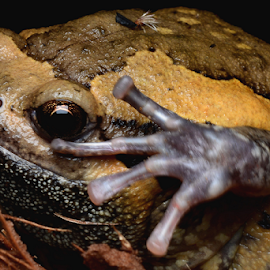 Froggy Hi 5!! by Ferdinand Ludo - Animals Amphibians ( hi five, nocturnal photo shoot, froggy )