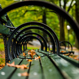 Through the loops by Pierre Tessier - City,  Street & Park  City Parks ( ny city, fine art, object, nyc, furniture, leaves, city park, bokeh, artistic blur, public park, autumn, fall, park bench, raindrops, public bench,  )