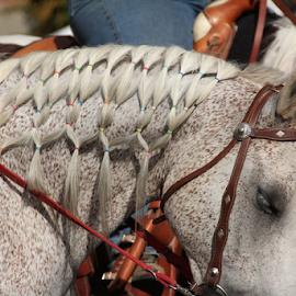 by Dean Perrault - Animals Horses