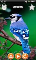 Screenshot of Birds Sounds Relax and Sleep