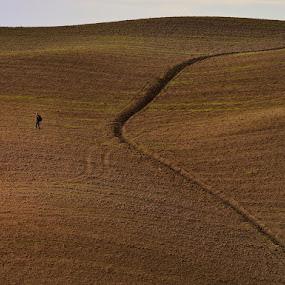 Tuscany soil by Silva Predalič - Landscapes Prairies, Meadows & Fields