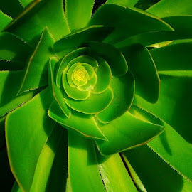 Sunlit Green by Leigh Martin - Nature Up Close Gardens & Produce ( green plant sunlight )