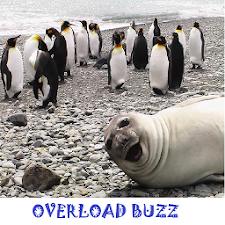 Overload Buzz - Fun Every Day!