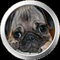 Pug Theme icon
