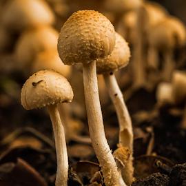 by Kawan Santoso - Nature Up Close Mushrooms & Fungi