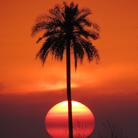 Fruit of nature by Prashant Bhardwaj - Landscapes Sunsets & Sunrises