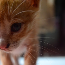 by Uninstall Akal Sehat - Animals - Cats Kittens