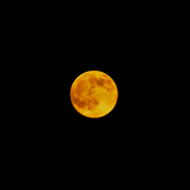 Honey Moon 1 by Migolatiev Marianna - News & Events Science ( moon, full moon, night, yellow, honey,  )