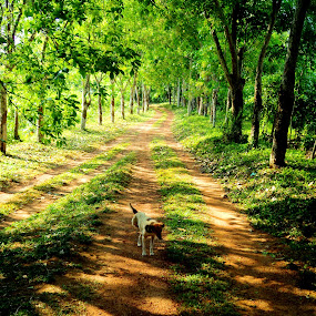 Spring time by Uthpala Kuruppuarachchi - City,  Street & Park  Neighborhoods ( rubber, nature, street, dog, spring )