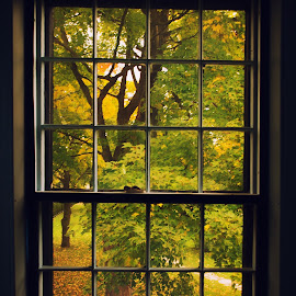 Autumn Outside the Window by Martin Belan - Buildings & Architecture Other Exteriors ( museums, window, autumn, fall, trees, vermont )