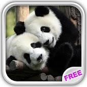 Free Download Sweet Pandas Live Wallpaper APK for Samsung