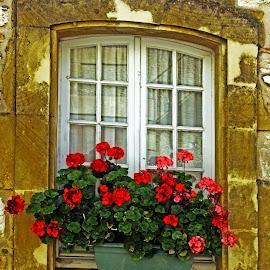 Geranium window by Michael Moore - Buildings & Architecture Architectural Detail ( window,  )